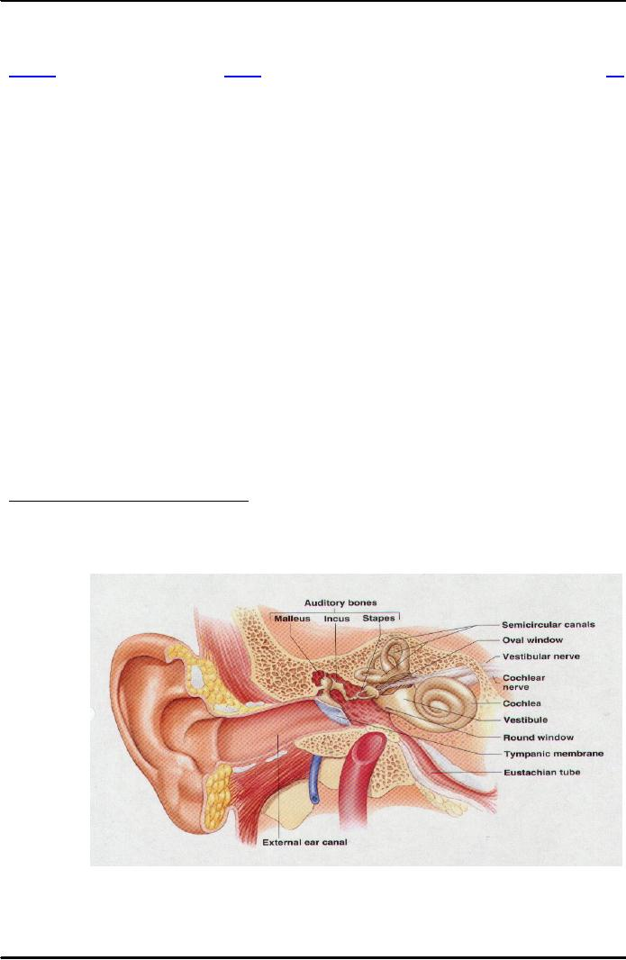 HEARING AUDITION AND BALANCE:The Outer Ear Auditory Canal ...